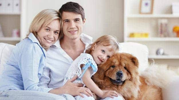Wills & Trusts dog-young-family Direct Wills Market Drayton